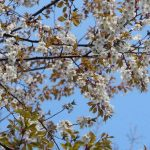里山再生計画 美しくしよう会 3月例会 シイタケ菌打ち