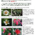 ぶらっとサロン通信6月増刊号