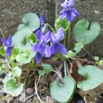 春を見つけに・・・