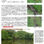 神田神社近くにキジが ヒナは9匹? 8匹?